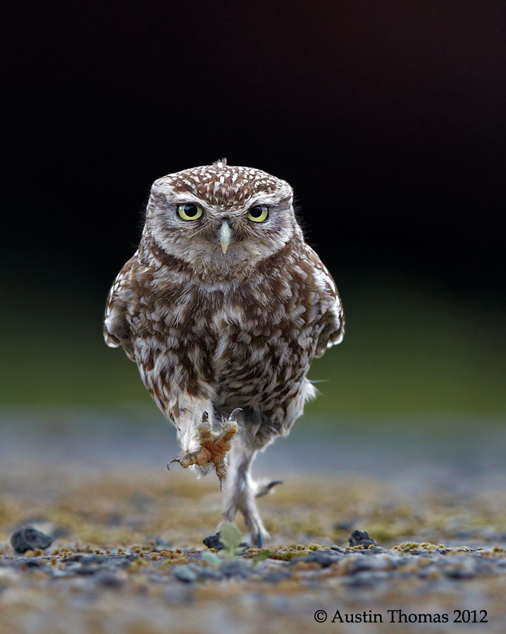 OWLympics