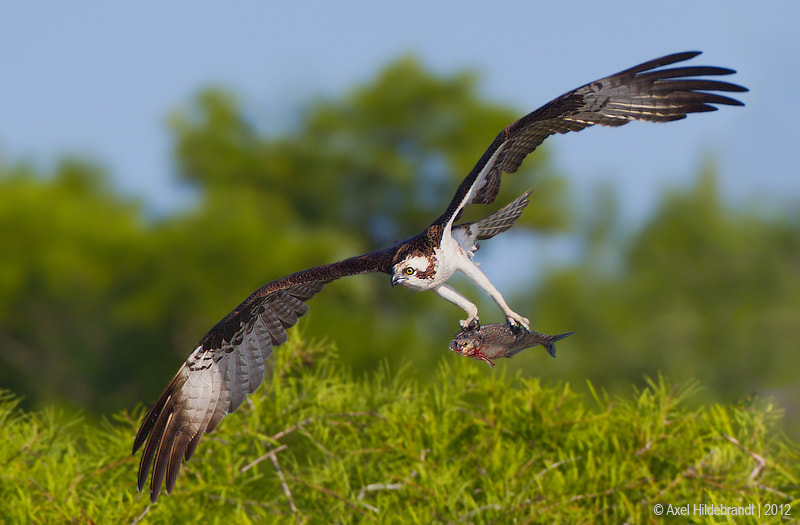 Photograph Heavy Catch by Axel Hildebrandt on 500px