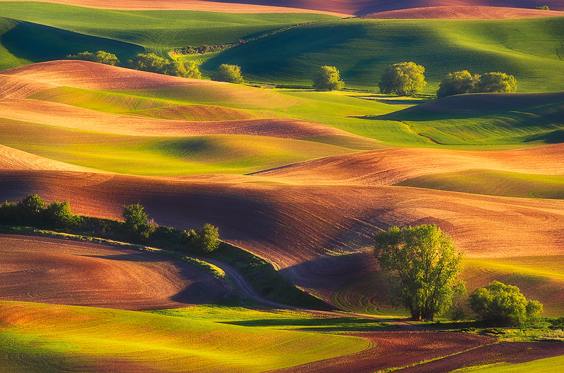 Photograph Wandering Colors by Nagesh Mahadev on 500px