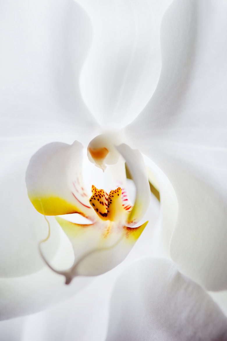 Photograph Delicacy by Mauro Woiski on 500px