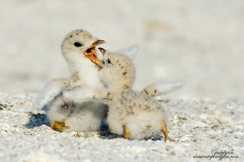 Photograph Even Newborns Play ! by Judylynn Malloch on 500px