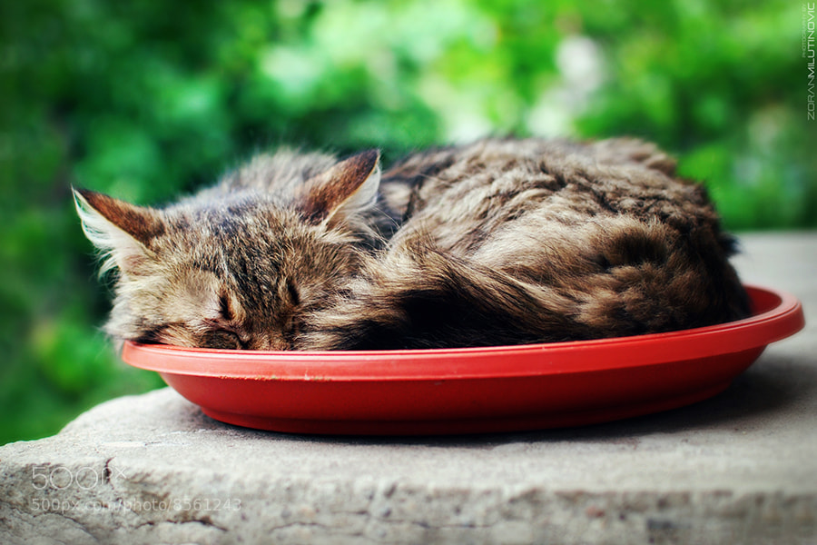 Photograph I sleep where I eat by Zoran Milutinovic on 500px