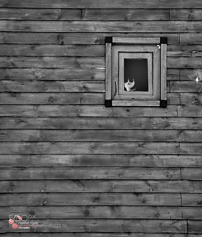 Photograph I *I by Peyman Az on 500px