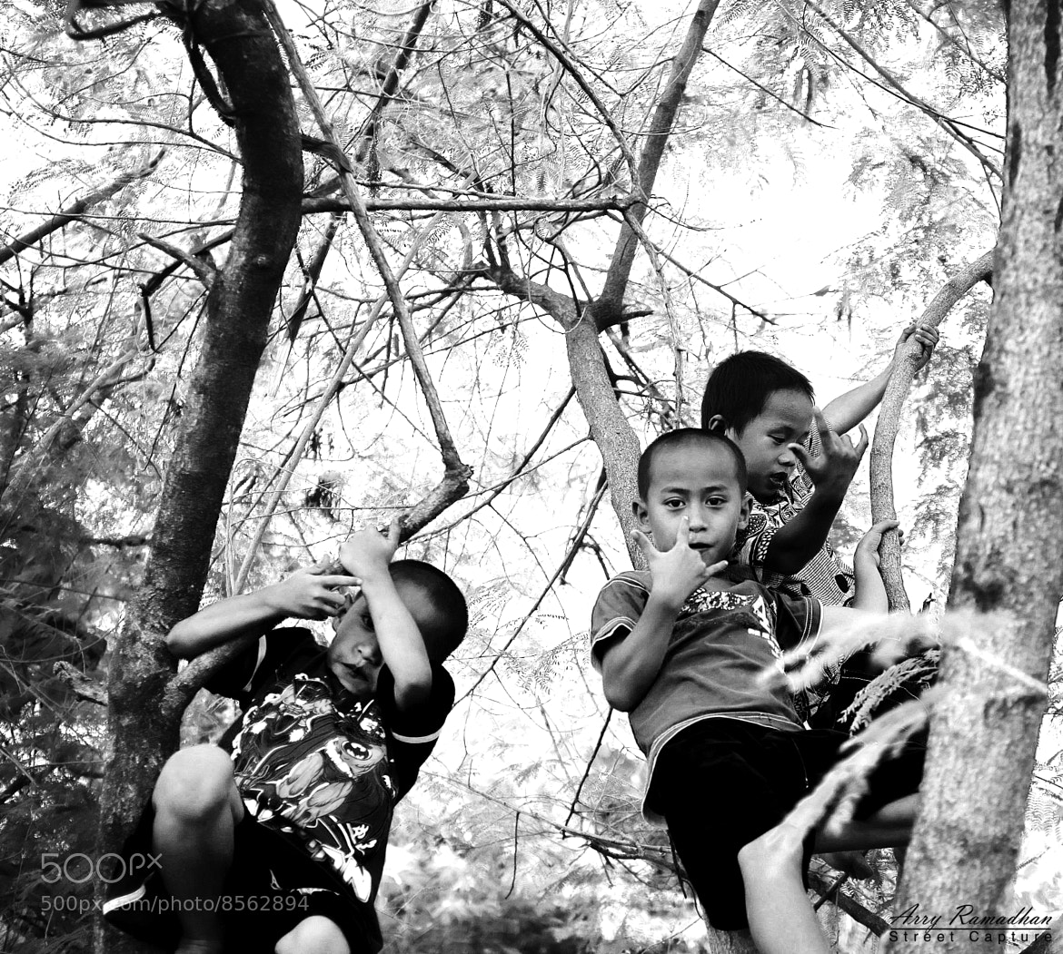 Photograph Childrens Climb The Tree by Arry  Ramadhan on 500px
