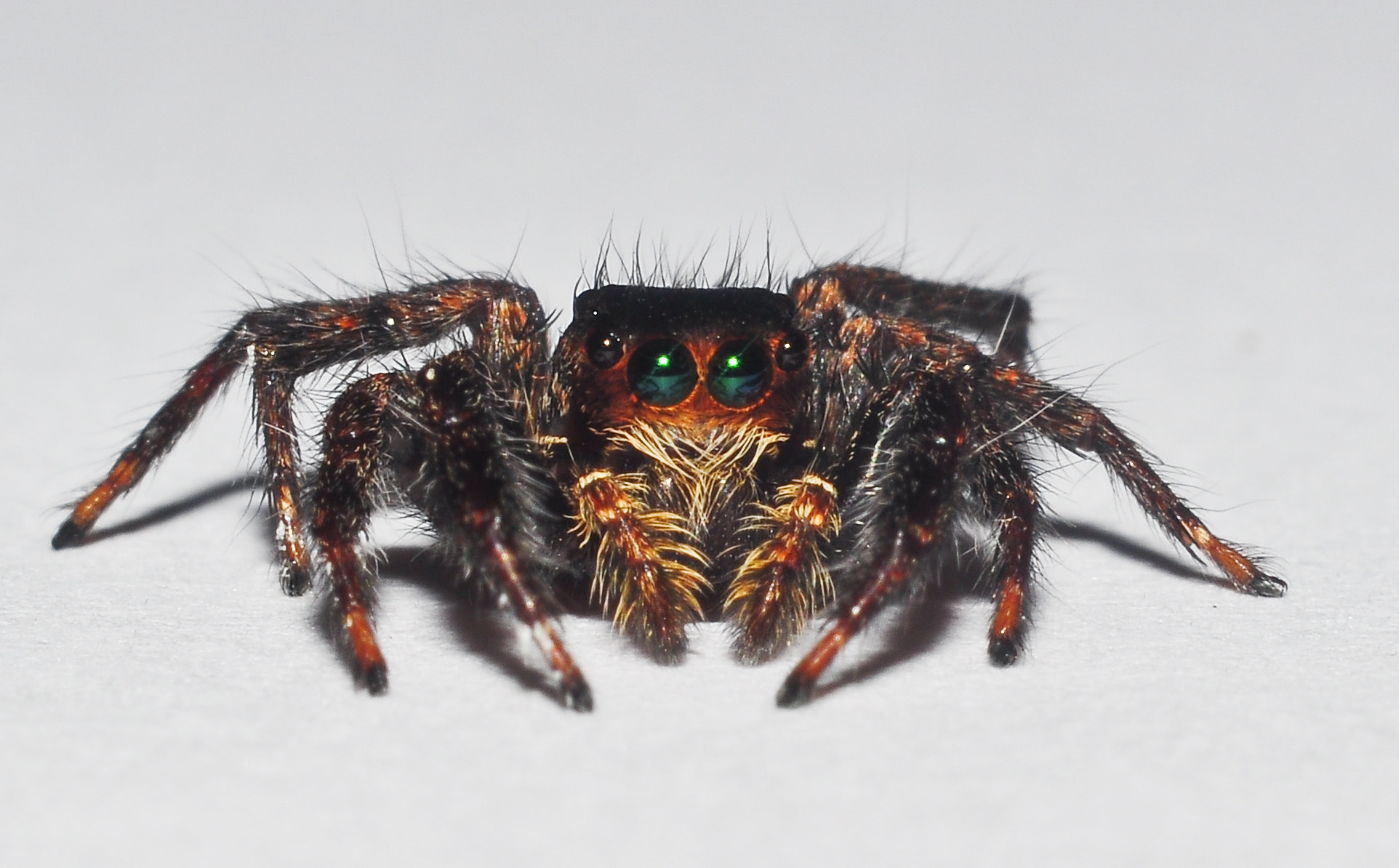 Photograph the jumping spider by Arif Othman on 500px