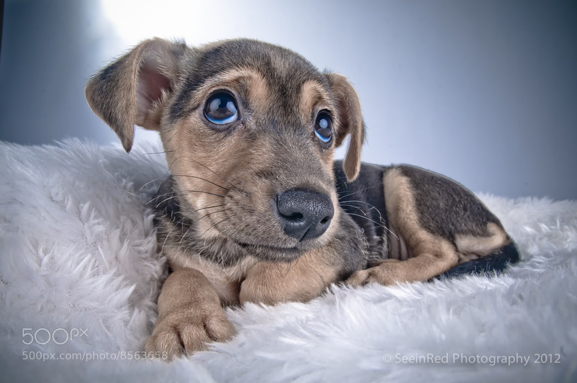 Photograph Dylan The Jack Russel by Chris Clark on 500px