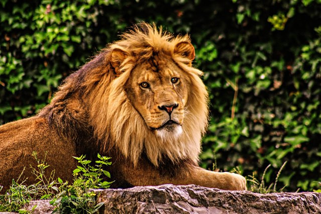 Photograph Pride by KW Lanning on 500px