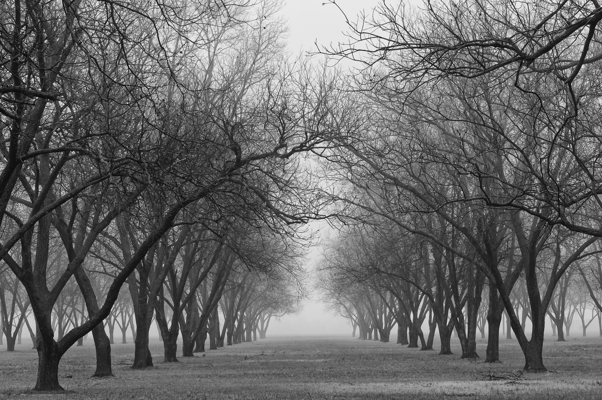 Photograph Pecan Orchard by john bingaman on 500px