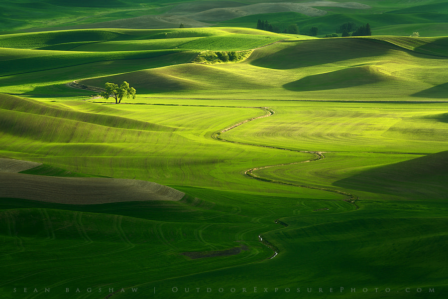 Photograph Pure Sunlight by Sean Bagshaw on 500px