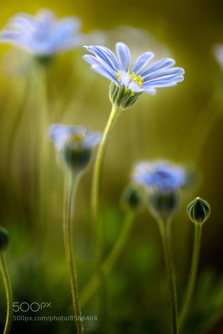 Photograph Felicia by Mandy Disher on 500px