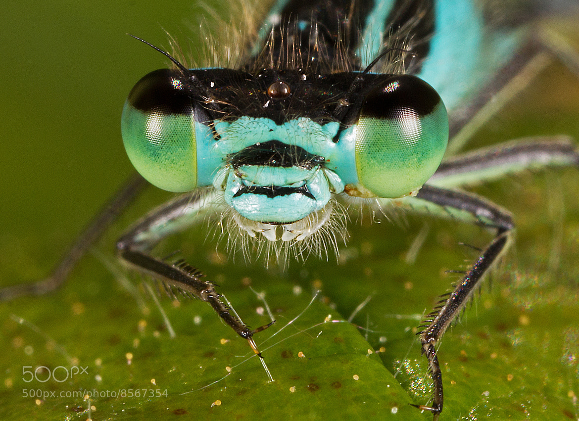 Photograph Damsel Fly by Mike Smith on 500px