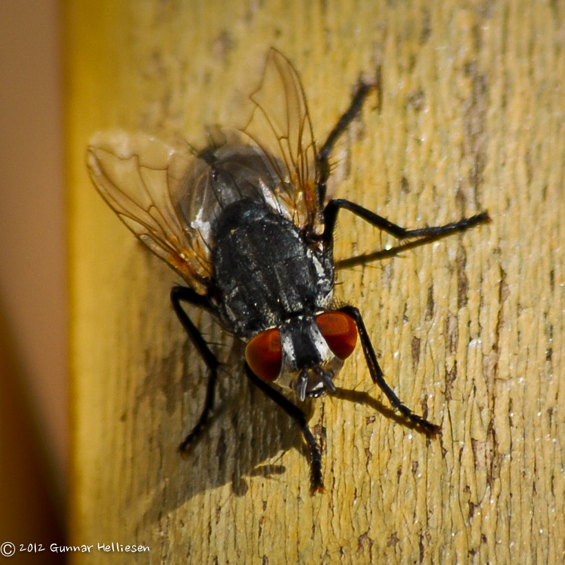 Photograph fly on the handle by Gunnar Helliesen on 500px