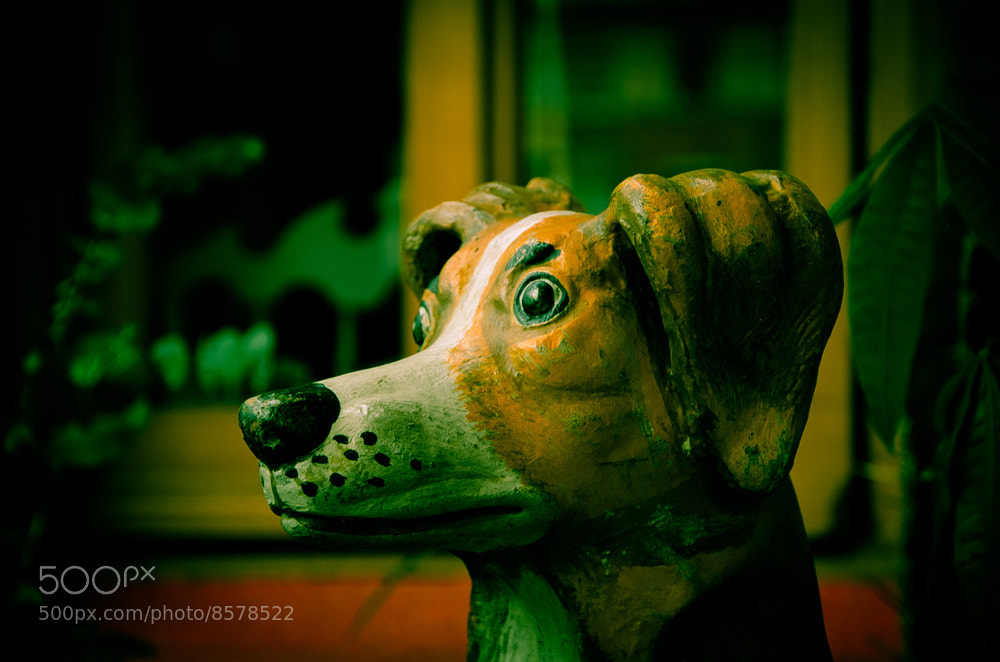 Photograph Perro Quieto by Héctor Barrera Carrera on 500px