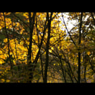 Постер, плакат: Autumn Film