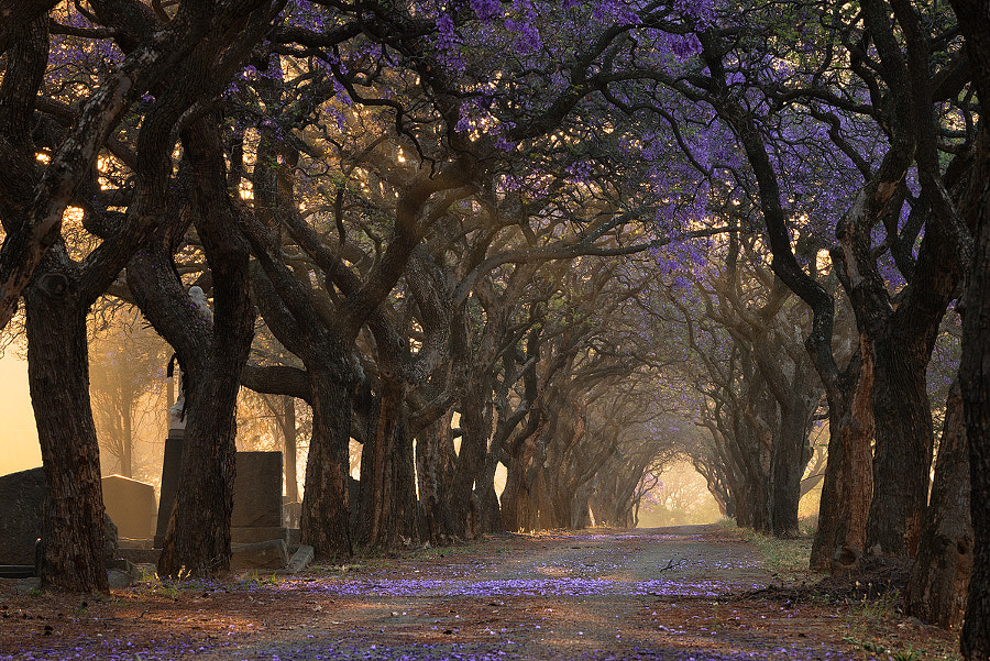 Purple Haze by Hougaard Malan on 500px.com