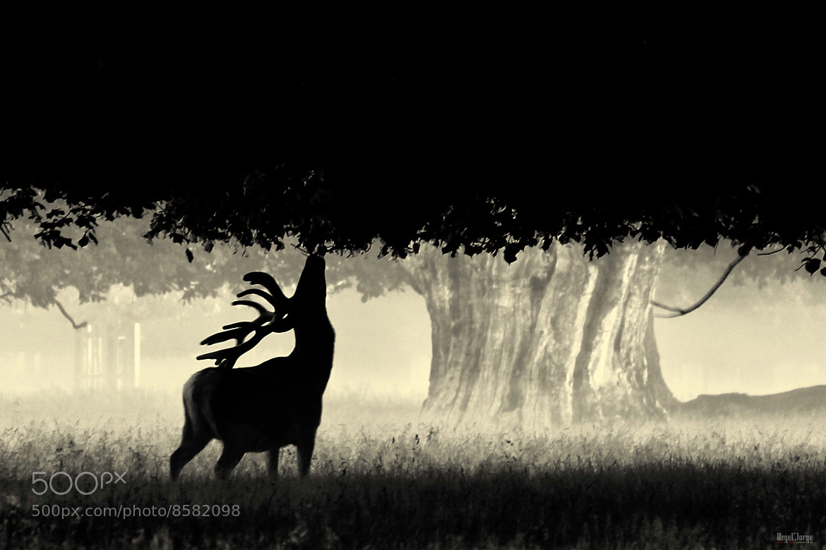 Photograph TW12 2EJ by Hegel Jorge on 500px