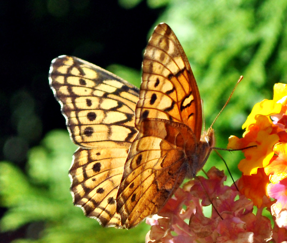 Photograph Butterfly 8 by Mark Luftig on 500px