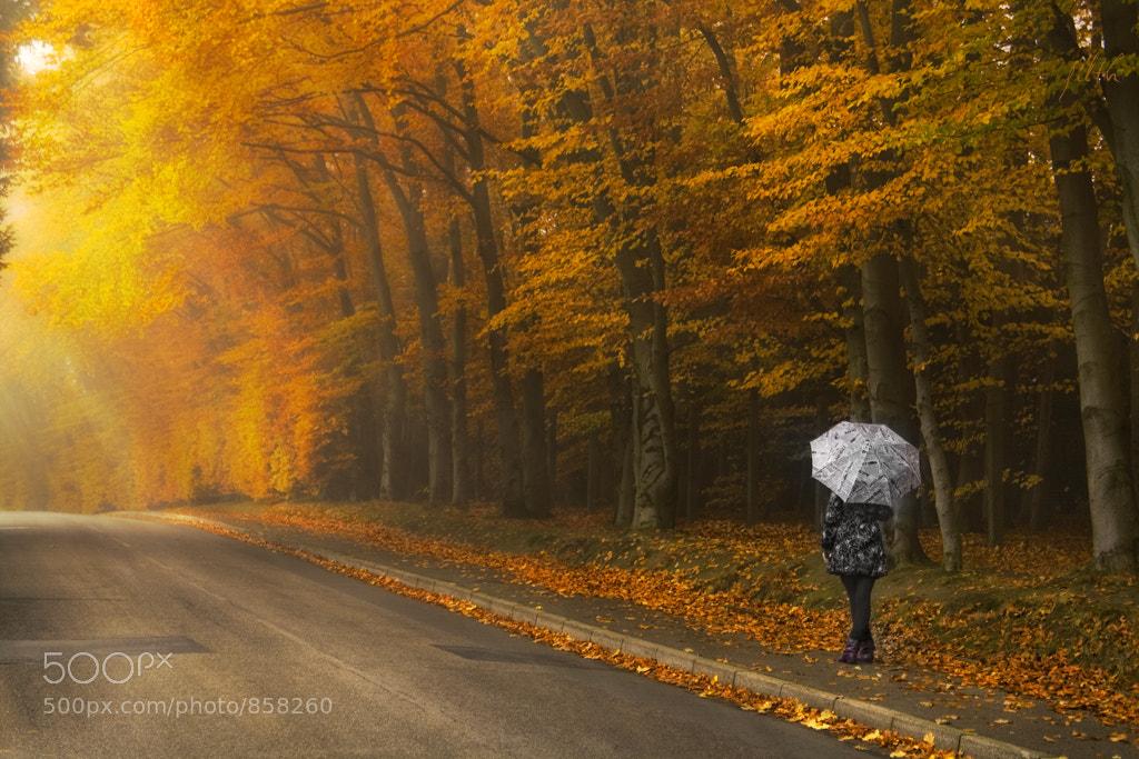 Photograph My Umbrella by Alex Tbk on 500px