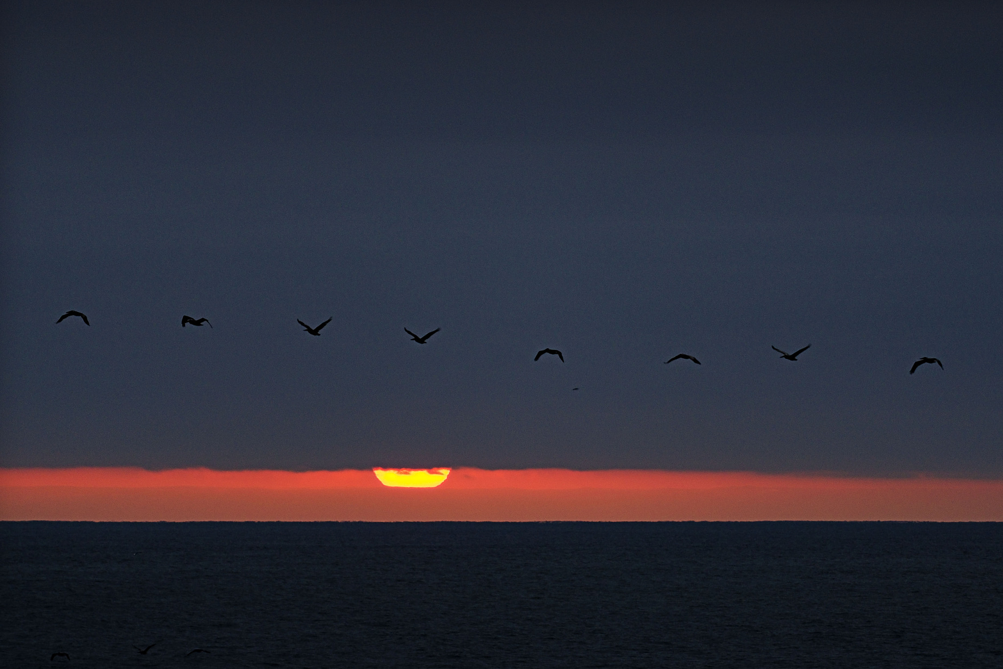 Photograph Pelicans at Sunset in Oceanside. June 14, 2012 by Rich Cruse on 500px