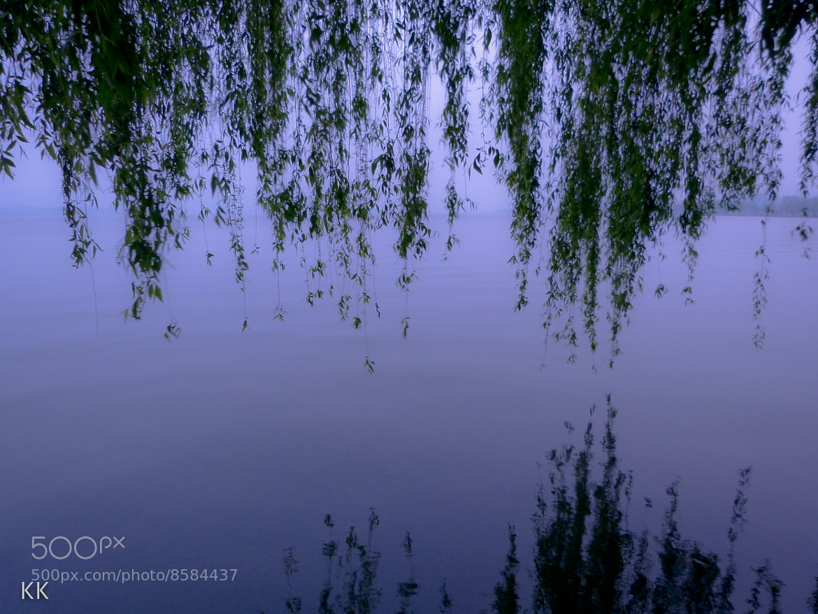 Photograph Weeping Willows by Kevin Kelly on 500px