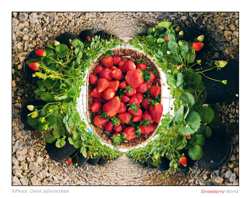 Photograph Strawberry World by Omid Jafarnezhad on 500px