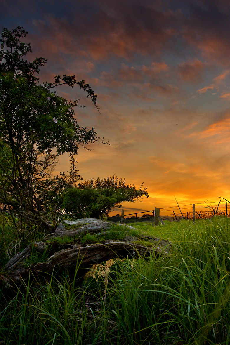 Photograph Summer Evening by Alan Sheers on 500px