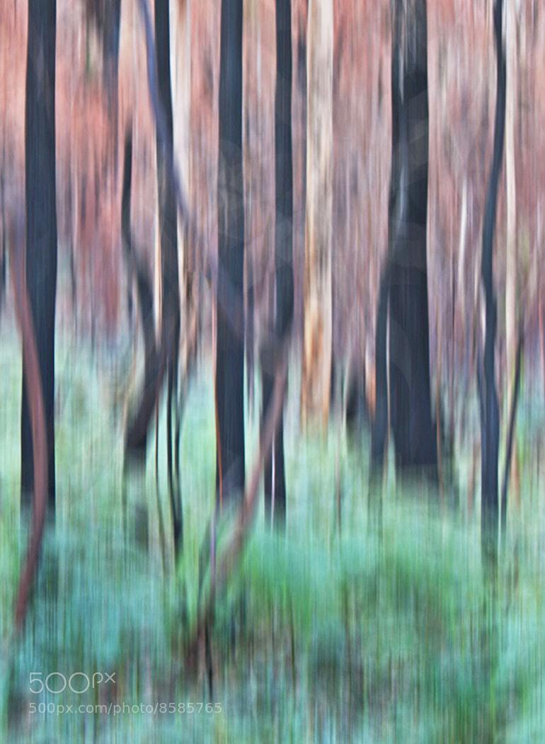Photograph Burnt karri Trees by rachel dunsdon on 500px
