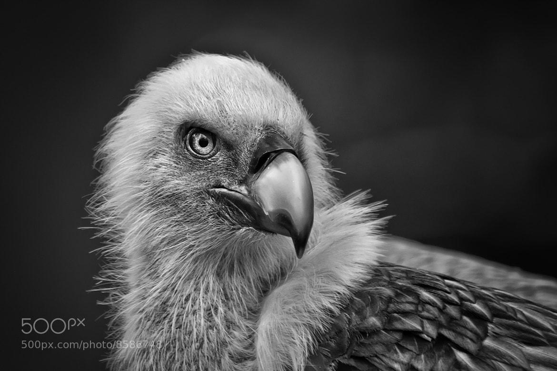 Photograph black & white by Detlef Knapp on 500px
