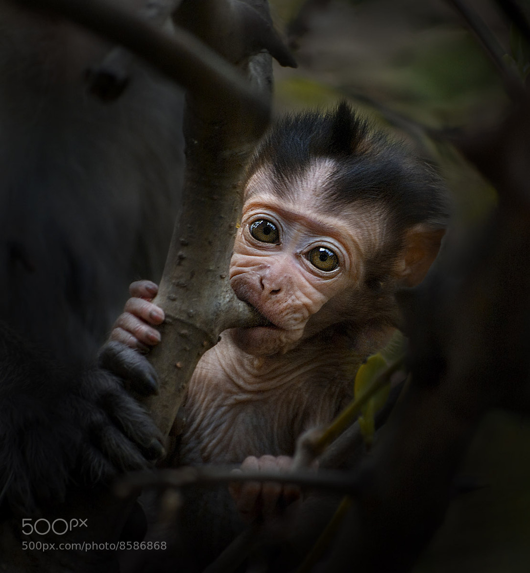 Photograph Monkey #2 by Saelan Wangsa on 500px