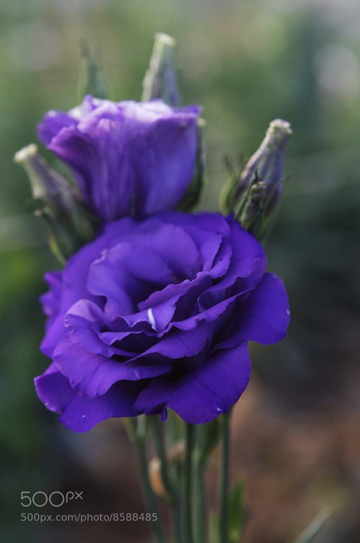 Photograph Blue flower by Cristobal Garciaferro Rubio on 500px
