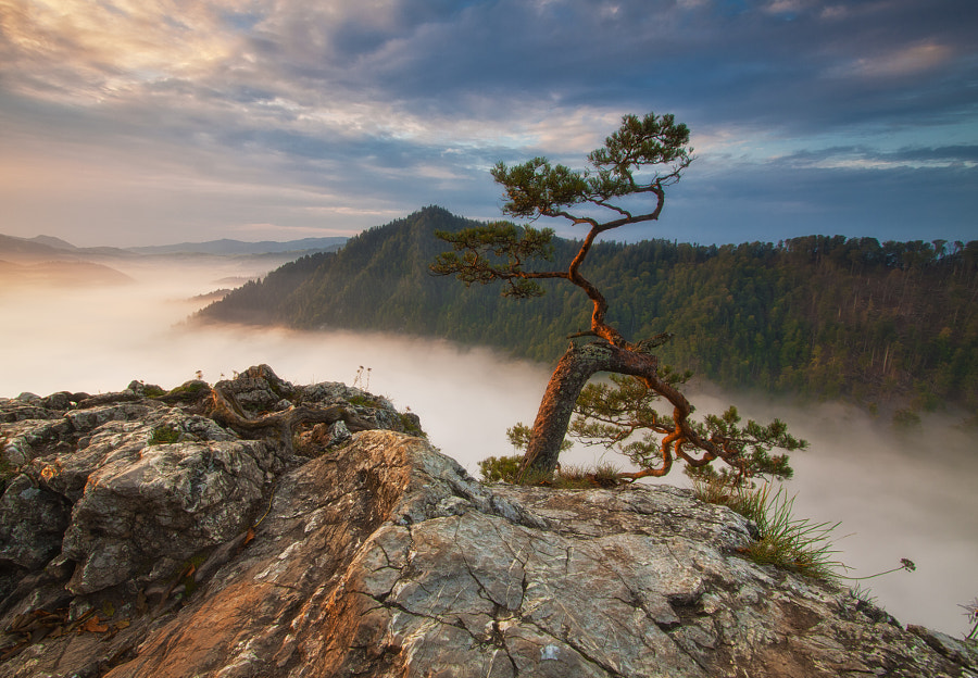 Photograph Pine by Paweł Uchorczak on 500px
