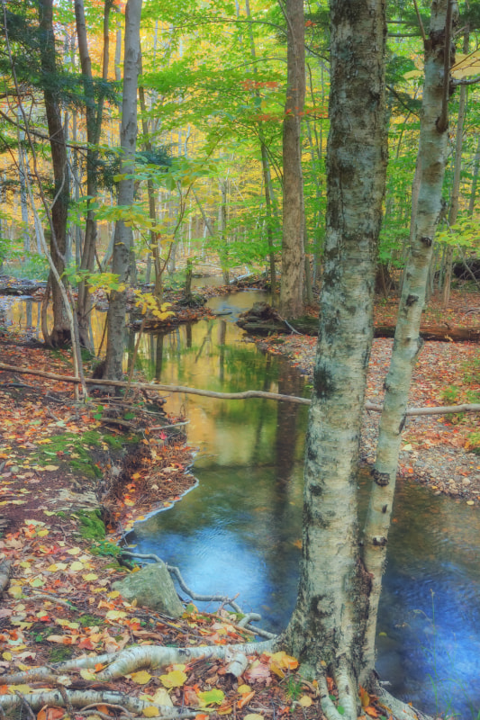 Photograph Forest Stream by Vincent James on 500px