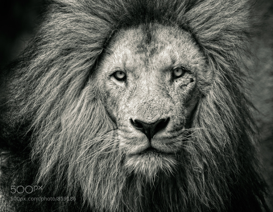 Photograph King by Jose Beut on 500px