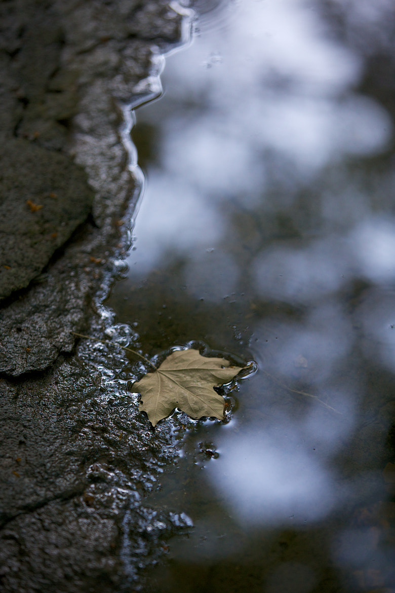 Photograph Wet Leaf by mitch aunger on 500px