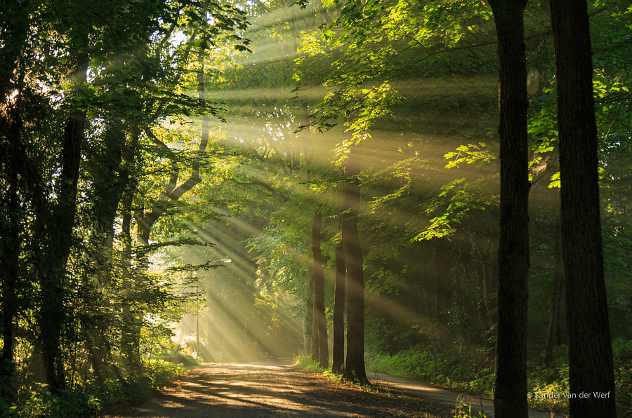 Sun ray road by Sander van der Werf on 500px.com