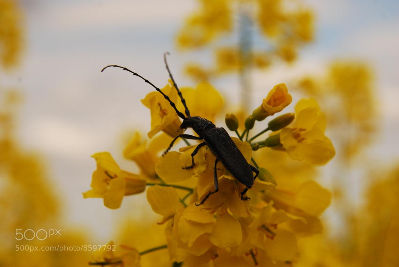 Photograph Insecta by Judit Vágási on 500px