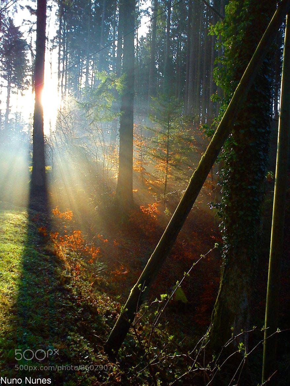 Photograph Forest sun. by Nuno Nunes on 500px