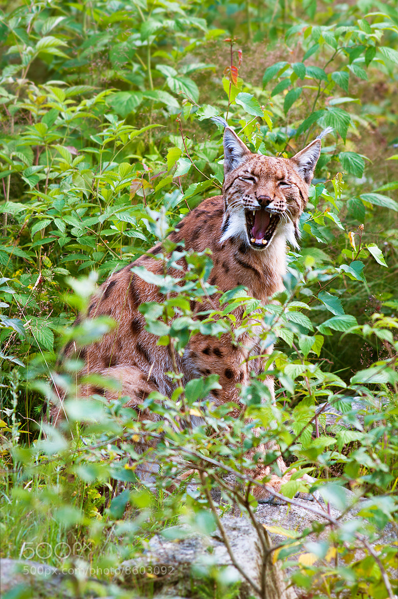 Photograph Yawn by Rob Janné on 500px