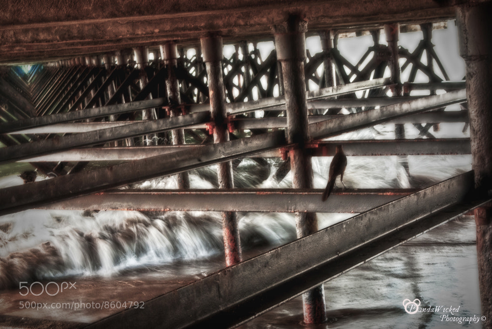 Photograph Painting under the bridge  by PandaWicked  on 500px