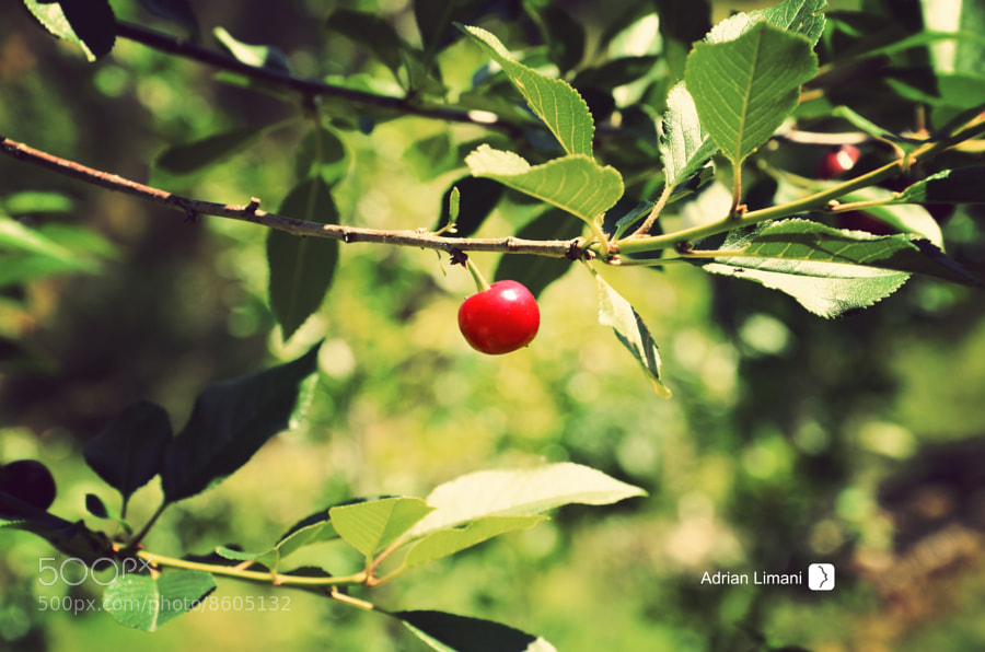 Photograph cherry by Adrian Limani on 500px