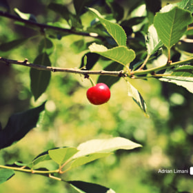 cherry by Adrian Limani (adrianlimani)) on 500px.com