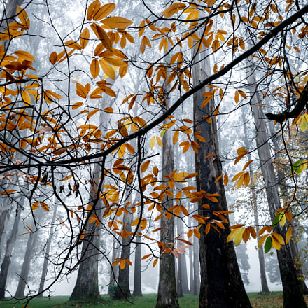 Misty Autumn in Melbourne Dandenong Ranges