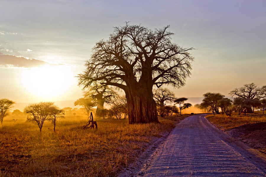 Photograph Sunset in Tarangire by Grete Howard on 500px