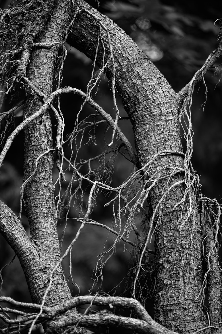 Photograph The Old Tree by Joseph Calev on 500px