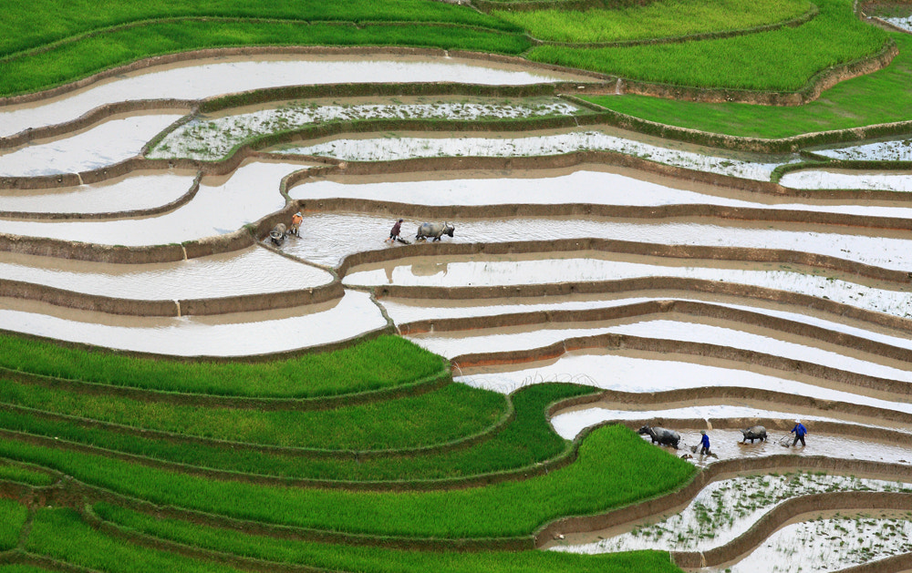 Photograph New season by Viet Hung on 500px