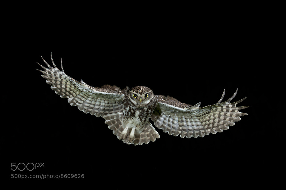Photograph A Prey's View by Dale Sutton on 500px