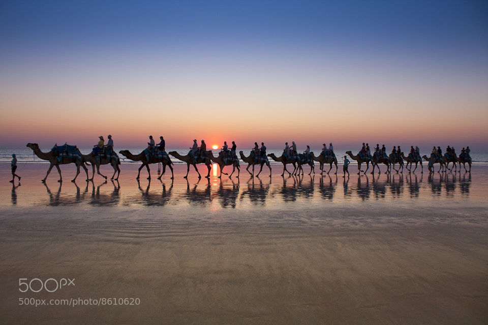 Photograph Cable Beach Camel Train by Jock Roarty on 500px