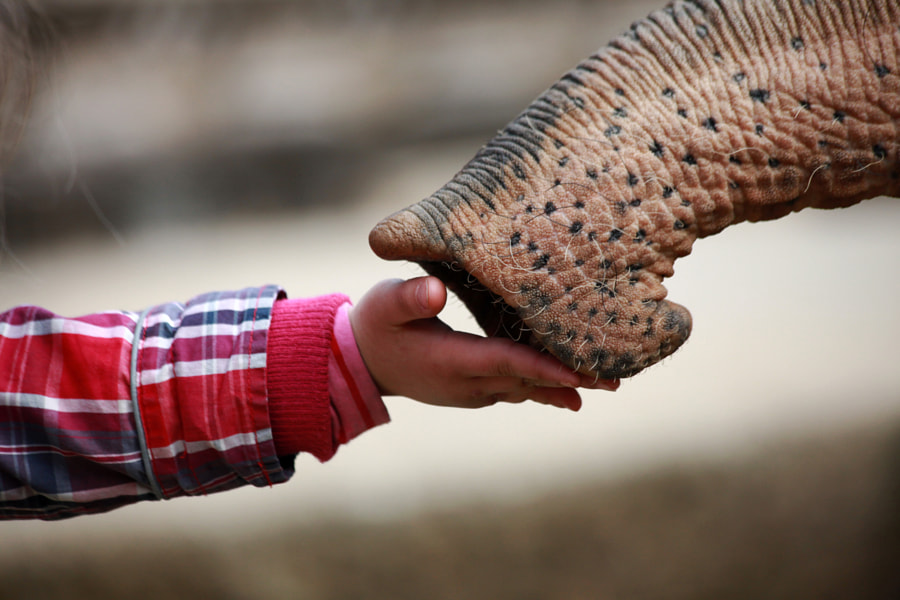 GIVE ME FIVE by Antje Wenner-Braun on 500px.com