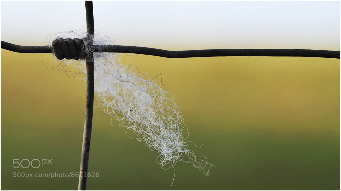 Photograph Wooly wire by allan squires on 500px