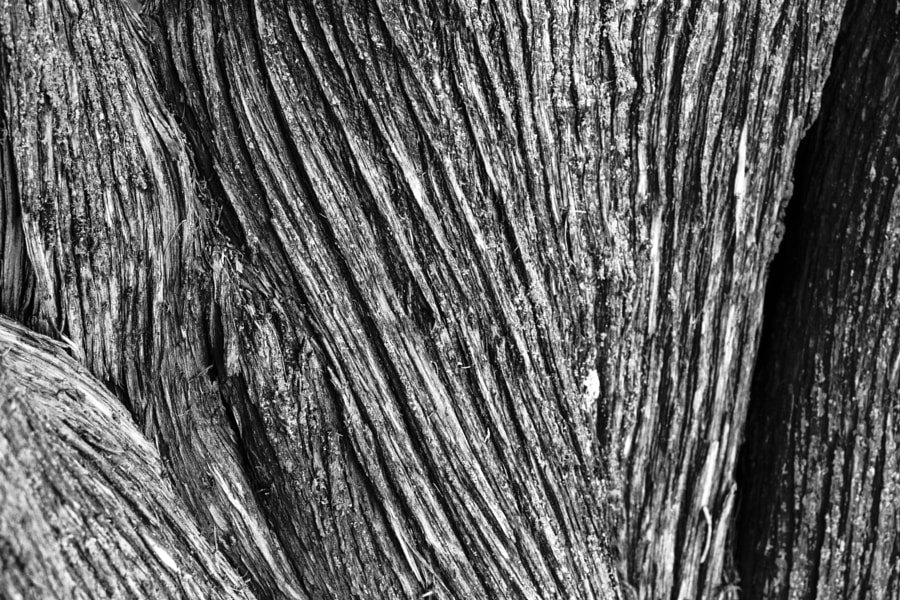 Tree Bark Texture by Jeff Carter on 500px.com